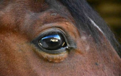olho cavalo